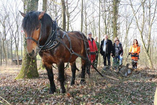 pferdearbeit_670